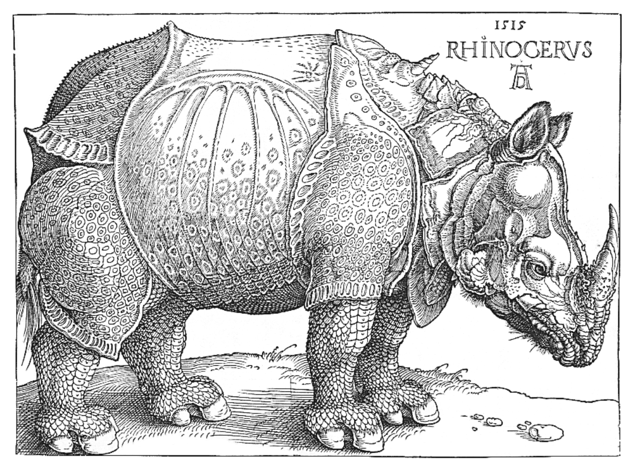 Image of a Rhinoceros